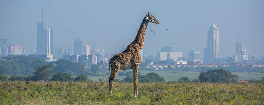 Kenya-1755x915